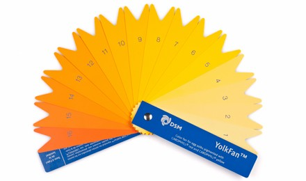 DSM-color-fan