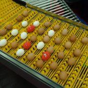 Wireless egg node on conveyor