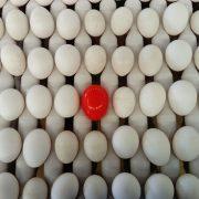 wireless egg node at Yamasa