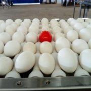 Wireless egg node1